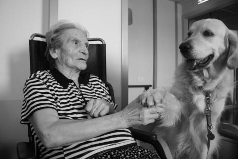 pet-therapy-421-e1460389820446